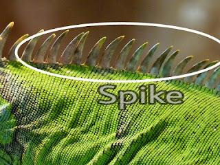 spike iguana