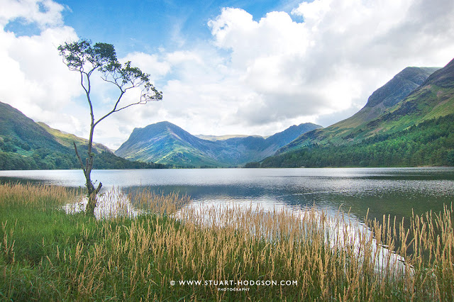 Buttermere, Fleetwith Pike, Tree, lake, Photo, Haystacks, Lake District walks, Alfred Wainwright