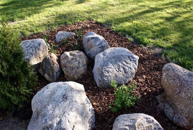 puutarha, lehtikuusi, tuija, kääpiövuorimänty, lilja, norjanangervo, kataja, kate, zicoshome, zicos.fi, zicos, house doctor, ruukku, puuvarasto