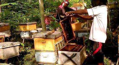 royal jelly cepu, pusat royal jelly dicepu, penjual royal jelly dicepu, peternak lebah jawa tengah, peternak lebah cepu, peternak lebah pati, lebah nusantara, madu nusantara, harga royal jelly di cepu, toko royal jelly di cepu, penjual royal jelly thailand di cepu, pedagang royal jelly di cepu, supplier royal ejlly di cepu, pengepul royal ejlly di cepu