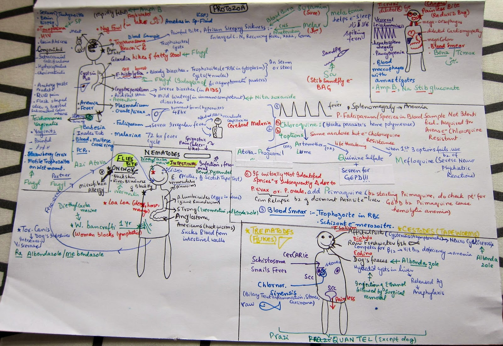 Medicowesome: Submissions: Microbiology notes