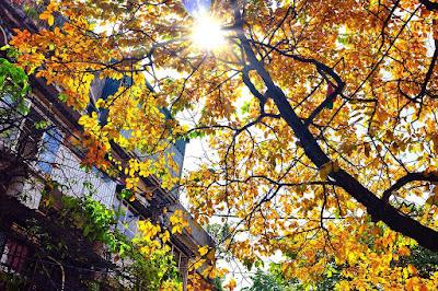 A peaceful Hanoi on the first autumn days