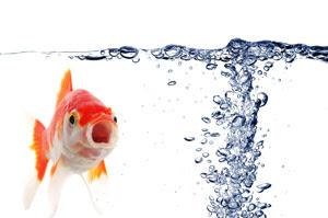 japon balığı oksijensiz yaşarmı
