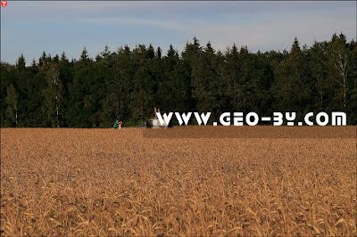 Внедорожник посреди поля пшеницы. Фотосессия