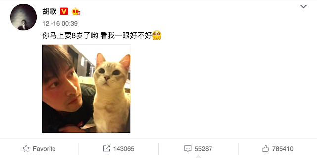 Hu Ge's cat almost 8 years old