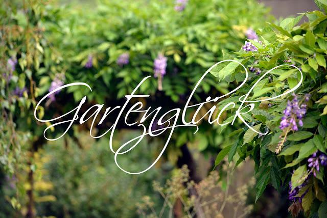 Gartenglueck, Blauregen