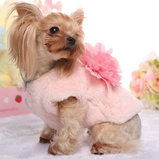 Pet Fashion Design Trends - The Latest Styles For the Fashion Forward Dog
