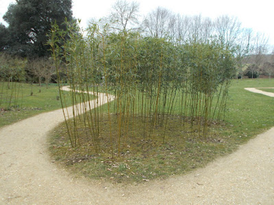 Bamboo screen Garden problems solved Kingston Lacy Green Fingered Blog