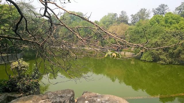 Pond, New Delhi, Lodhi Garden