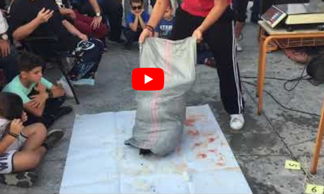 Δείτε Την Ψαριά Ψαροντουφεκάδων Στο 47ο Πρωτάθλημα Στην Καλαμάτα - Βίντεο