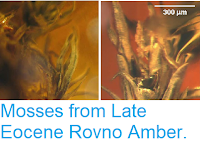 https://sciencythoughts.blogspot.com/2014/07/mosses-from-late-eocene-rovno-amber.html