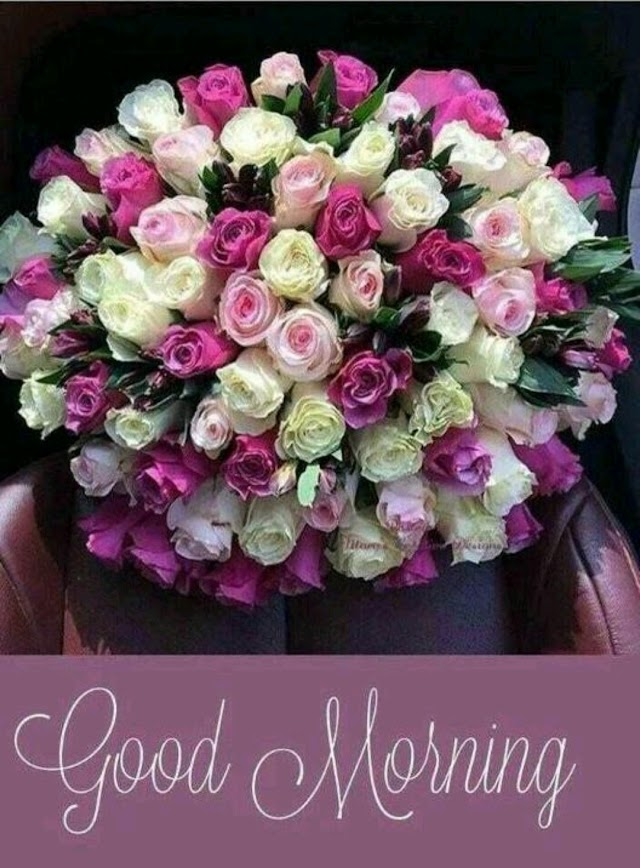 25+ Good Morning Images with Flowers HD Photos Download