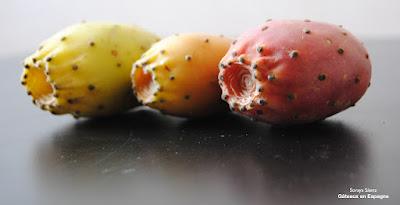 figues barbarie cultiver graines huile amaigrissant maigrir nopal