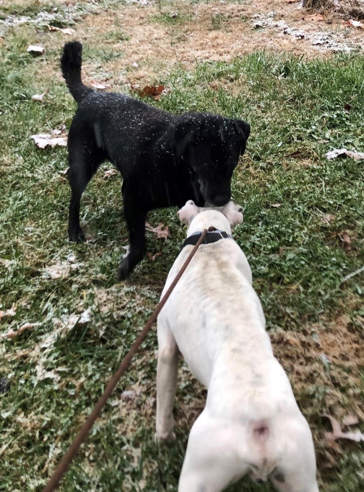 Wix Dog Rescue