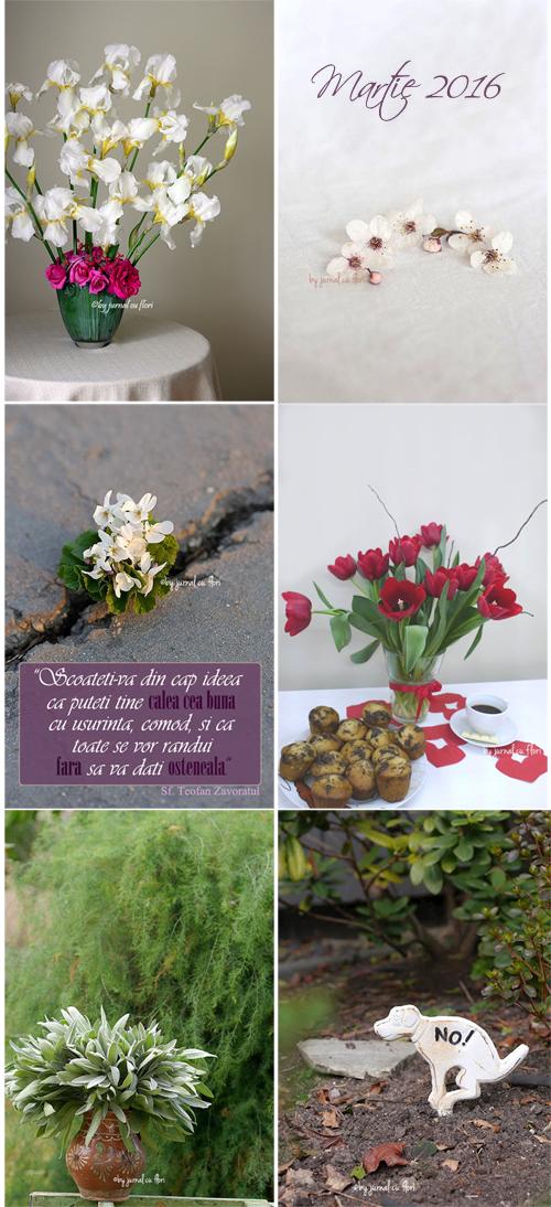 mozaicul lunii martie 2016 colaj fotografii si postari