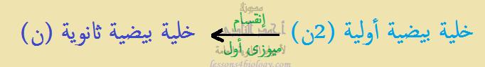 مراحل تكوين البويضة مرحلة النضج