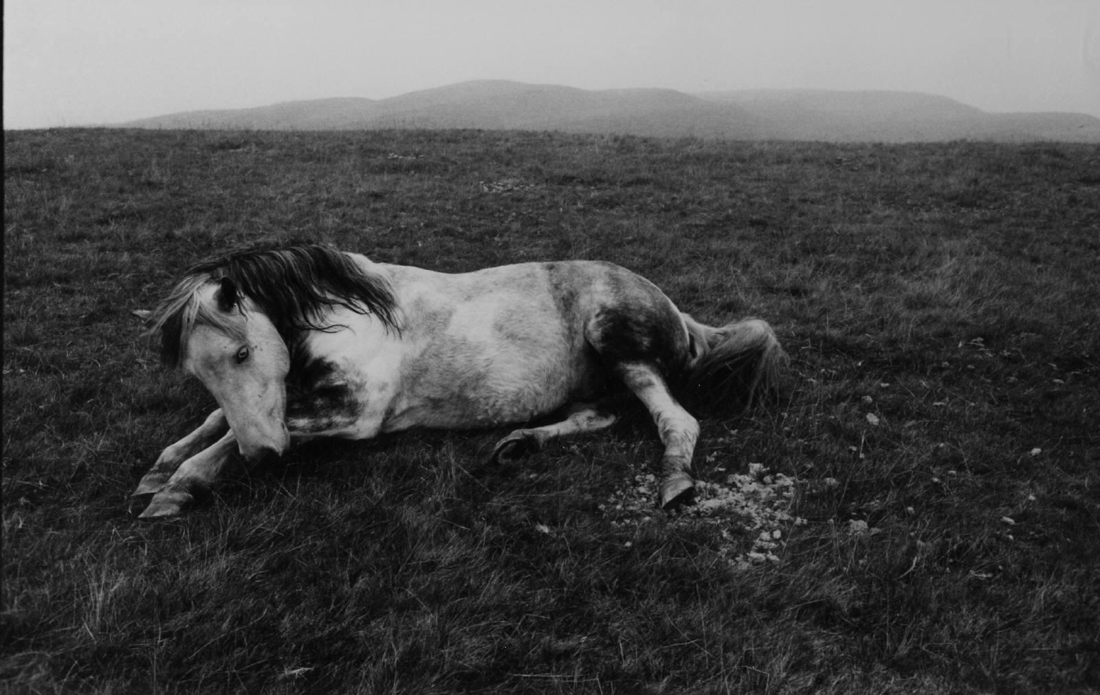 Anthony Luke's not just another photoblog Blog: Photographer