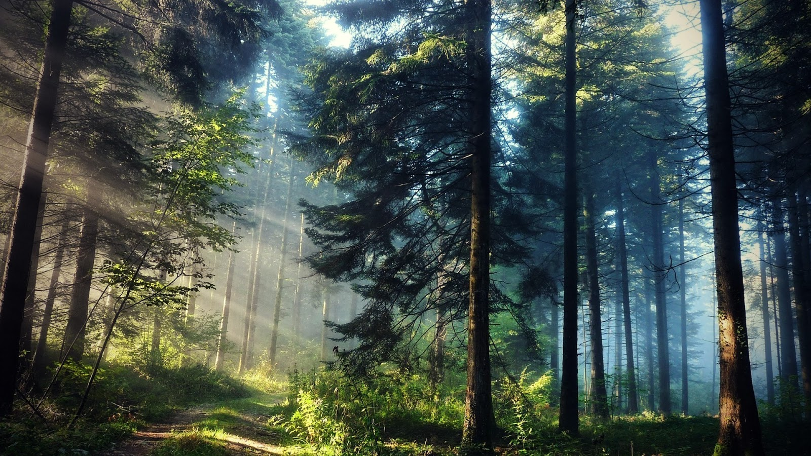 Beautiful Forest Landscape Wallpaper