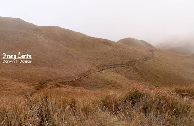 Mt. Pulag trails 2020
