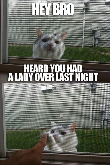 Funny Cat Lady Friend High Five Joke Picture