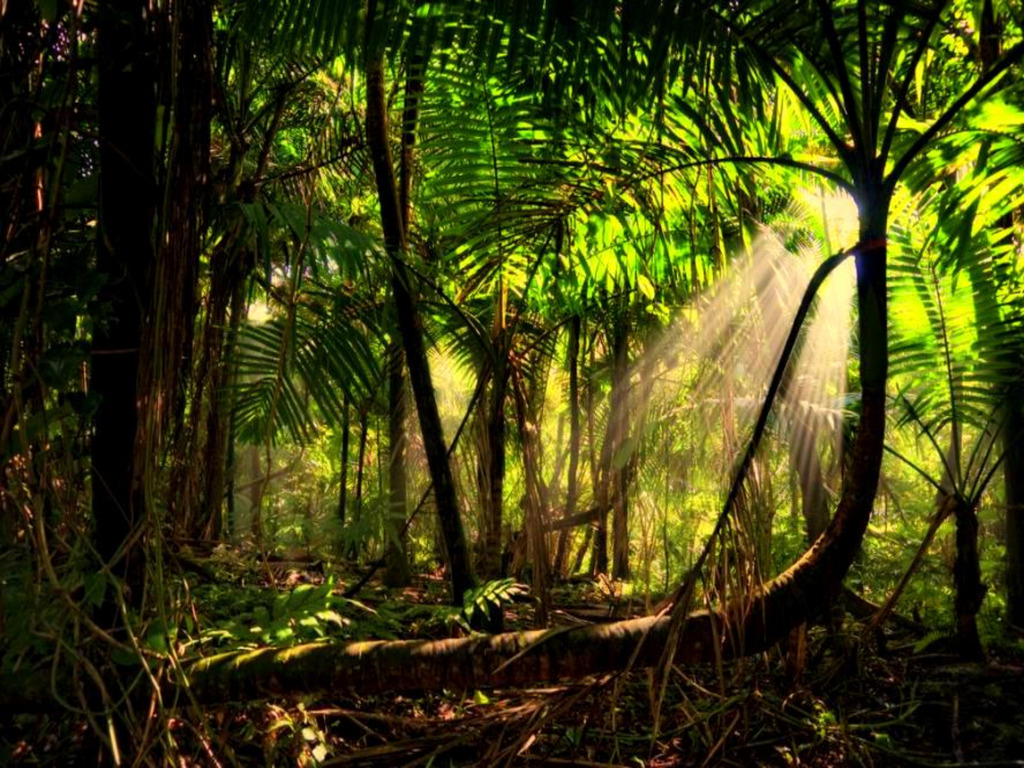 Beautiful Rainforest Backgrounds