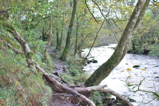 river-with-path-with-fallen-branches-across-it