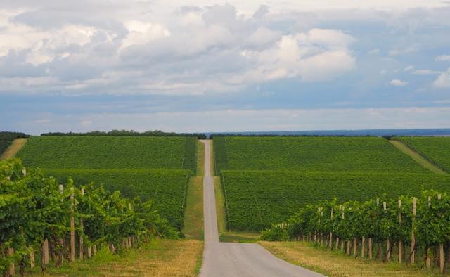 wijntoerisme kroatië, wijntoerisme baranja, kroatische wijnen, vina belje, josic winery, grasevina, donauwijnen,