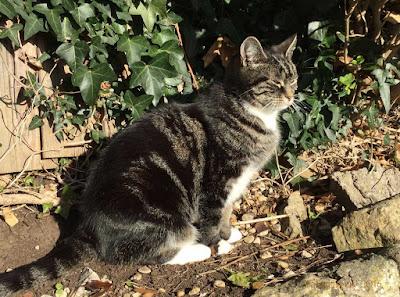 Suzi the Cat, November 2016
