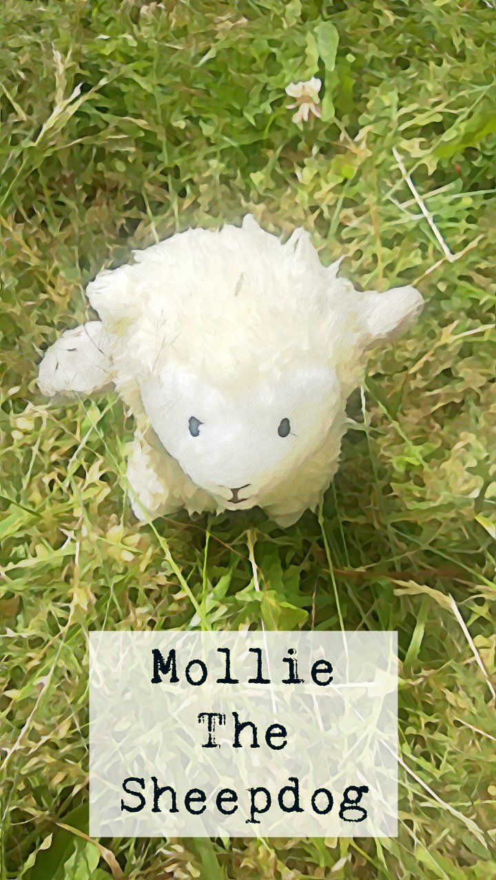Mollie The Sheepdog