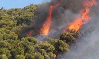 Φωτιές σε Δαφνούλα, Ολύμπια και