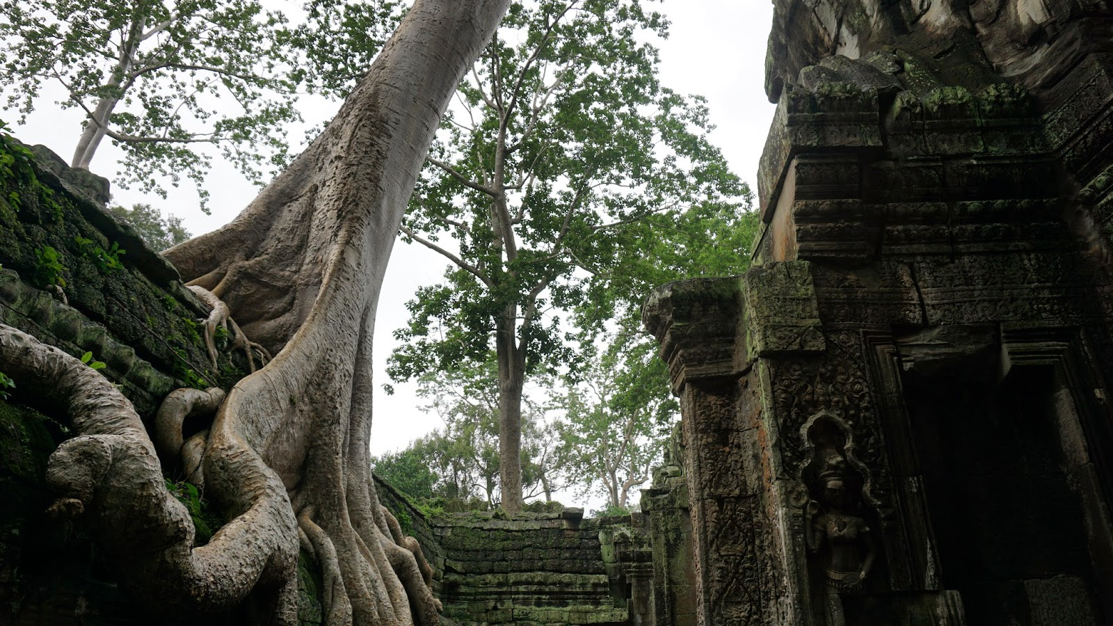 Ta Prohm, of Tomb Raider fame