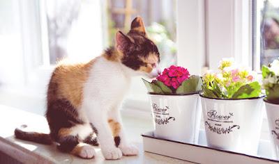 http://s3.party.pl/newsy/kot-siedzi-na-parapecie-i-wacha-kwiatki-doniczkowe-396932-article.jpg