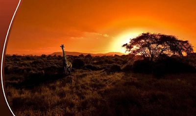 Planning a visit to Africa: here are the best itineraries