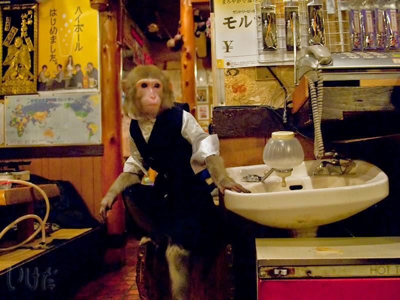 Monkey waiter at Japanese restaurant