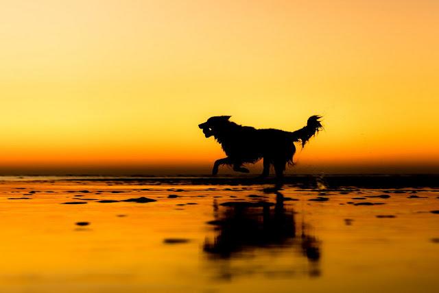 The Kennel Club i zwycięzcy konkursu na najlepszego fotografa psów 2017 roku. The Kennel Club and dog photographer of the 2017 year.