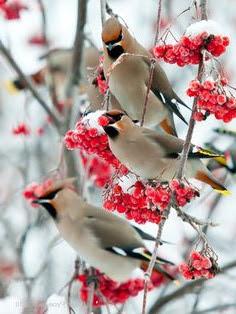 agriculture bird control