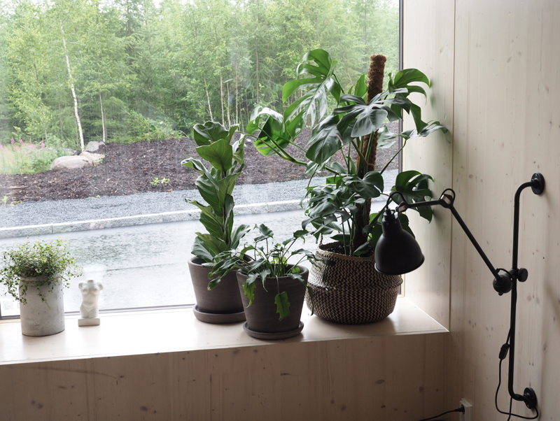viherkasvit sisustuksessa