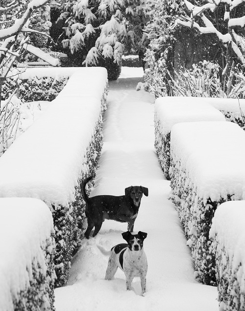 dogs in snow on farm in Italy