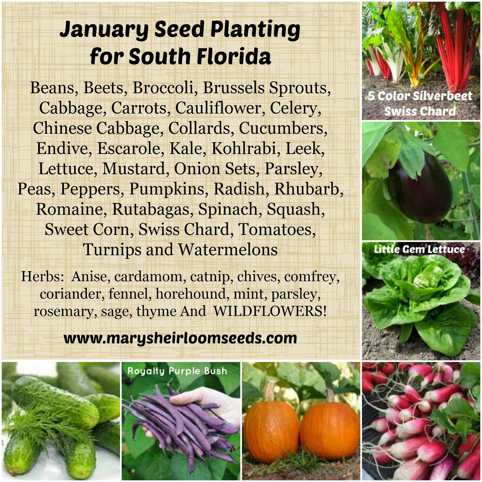 2017 Planting Guide January Seed In South Florida