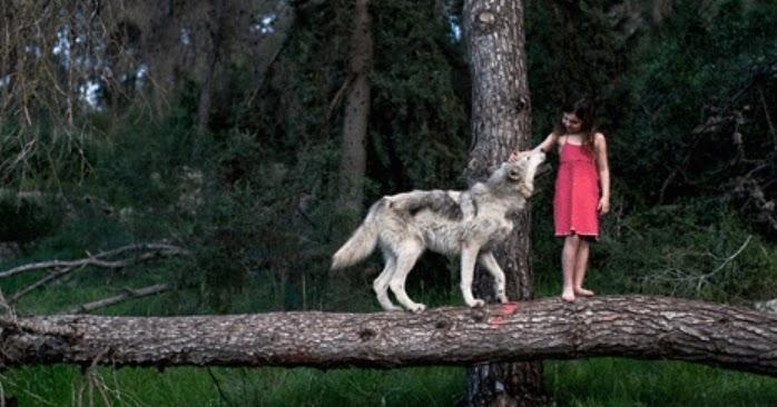 Pet Play Wolf