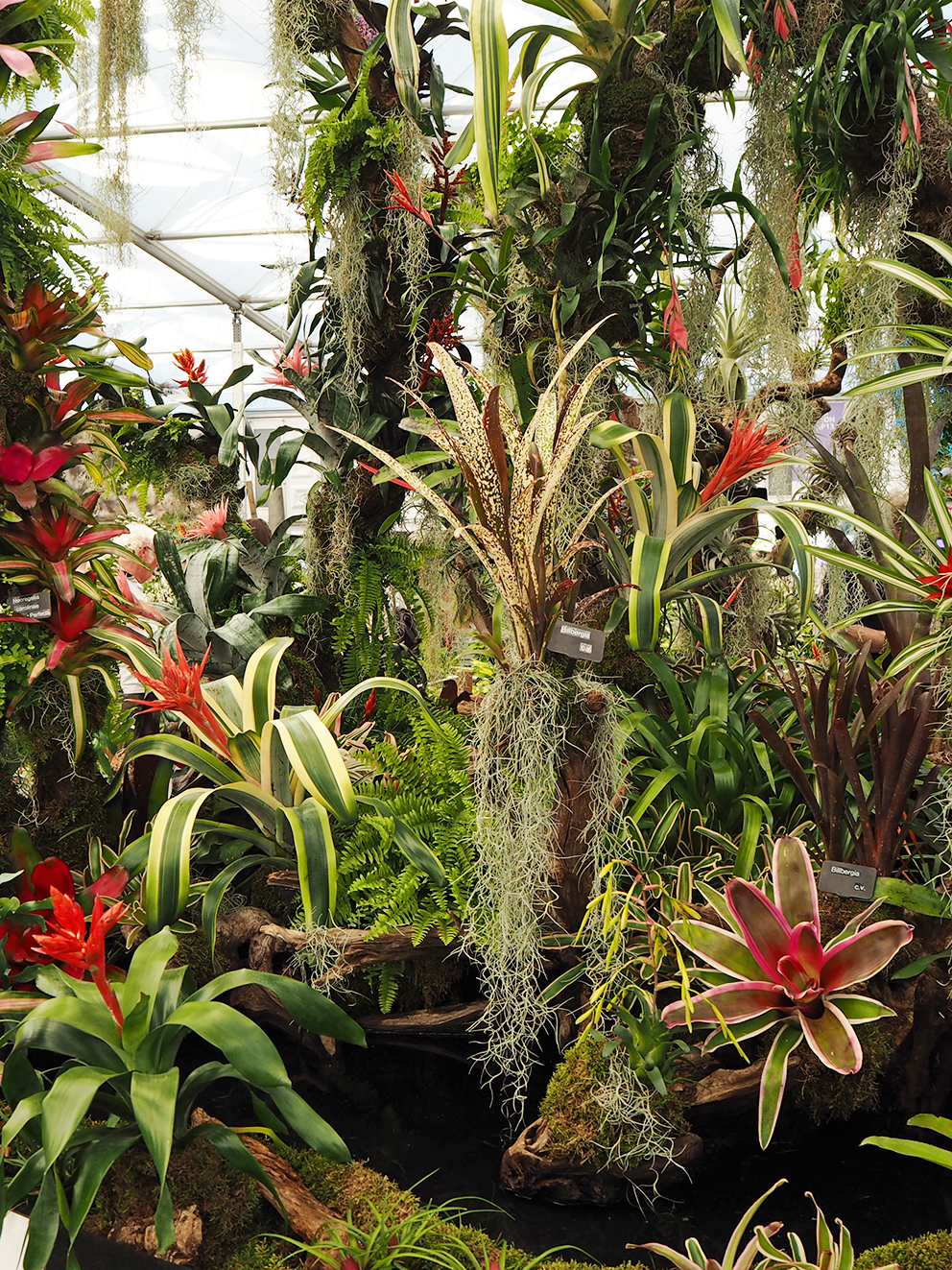 French For Pineapple Blog - RHS Chelsea Flower Show 2017 - Bromeliad Garden