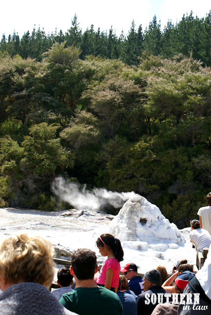 The Lady Knox Geyser at Wai-O-Tapu Thermal Wonderland New Zealand