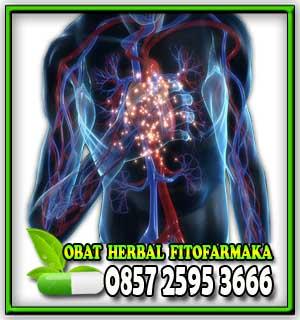 jantung lemah, organ jantung, serangan jantung, obat herbal jantung