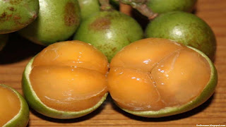 mamoncillo fruit images wallpaper