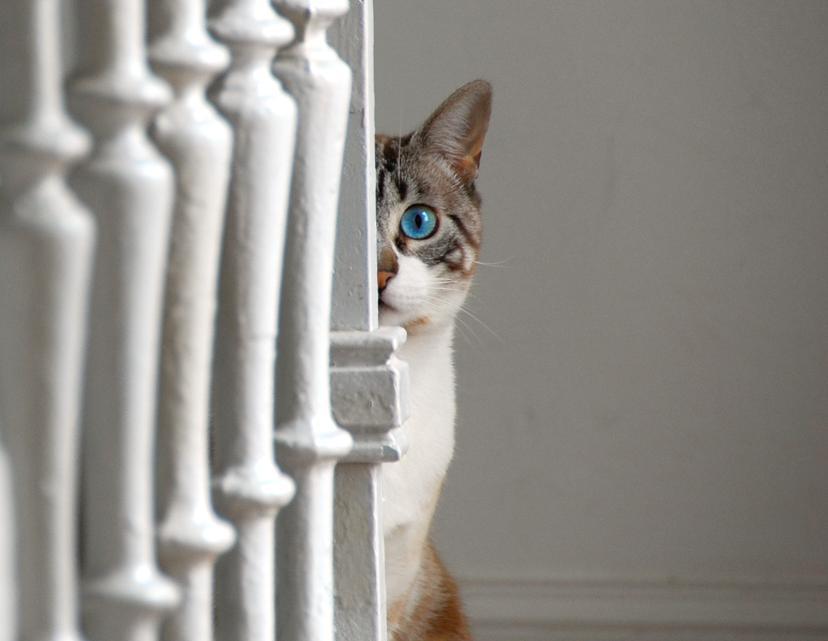 kissan sukukypsyys ilmaiset deittisivut