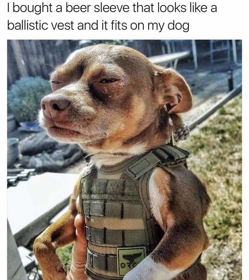 dog ballistic vest