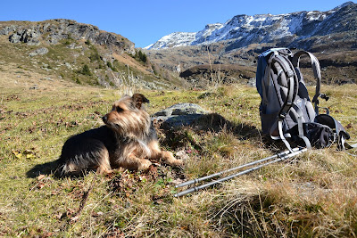 Dog resting next to a backpack and trekking poles