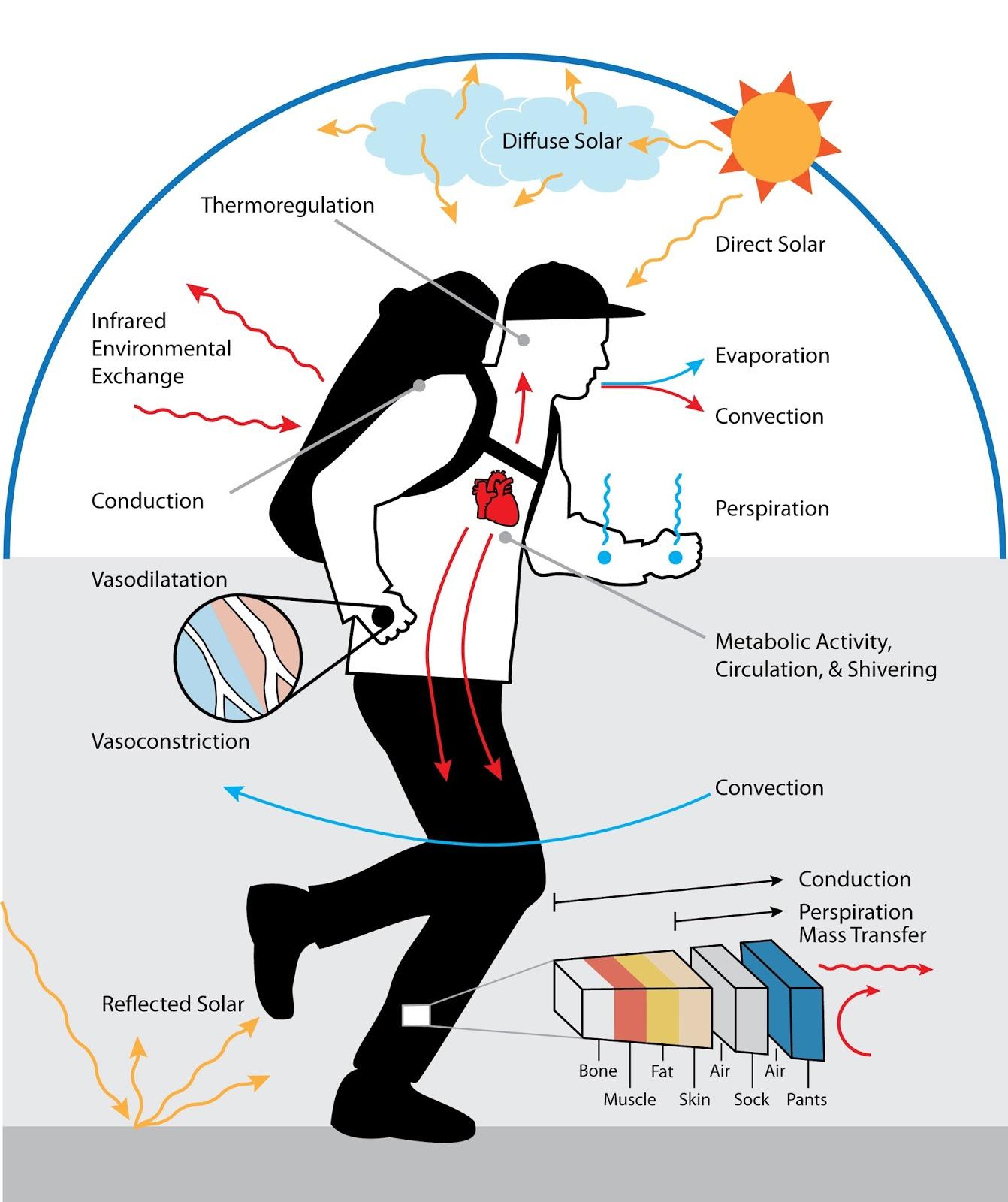 3 Surefire Ways Metabolismo basal impulsará su negocio al suelo