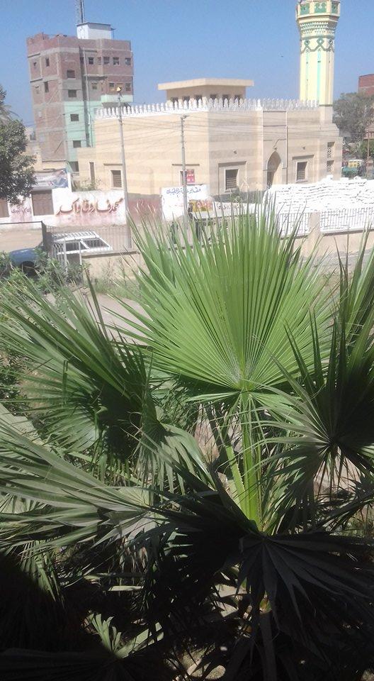 http://kafrsaqr.blogspot.com/