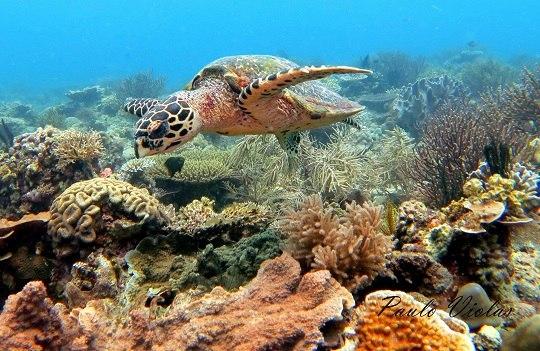 Diving in Bantayan Island